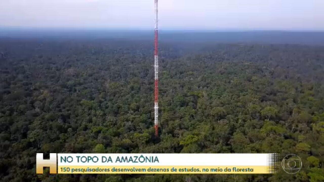 No meio da Floresta Amazônica, 150 pesquisadores desenvolvem estudos com ajuda de 3 torres