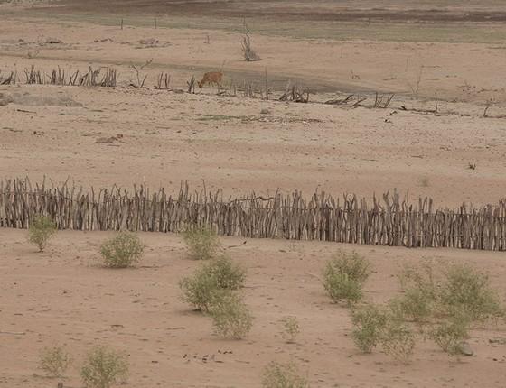 A cerca de troncos de árvores é tudo o que resta em pé das áreas que viram deserto, como esta no sertão baiano. O rio perene voltou com as chuvas do início deste ano, mas cientistas dizem que a chuva não detém a desertificação em áreas já esterilizada (Foto: DANIEL MARENCO/AGÊNCIA O GLOBO)