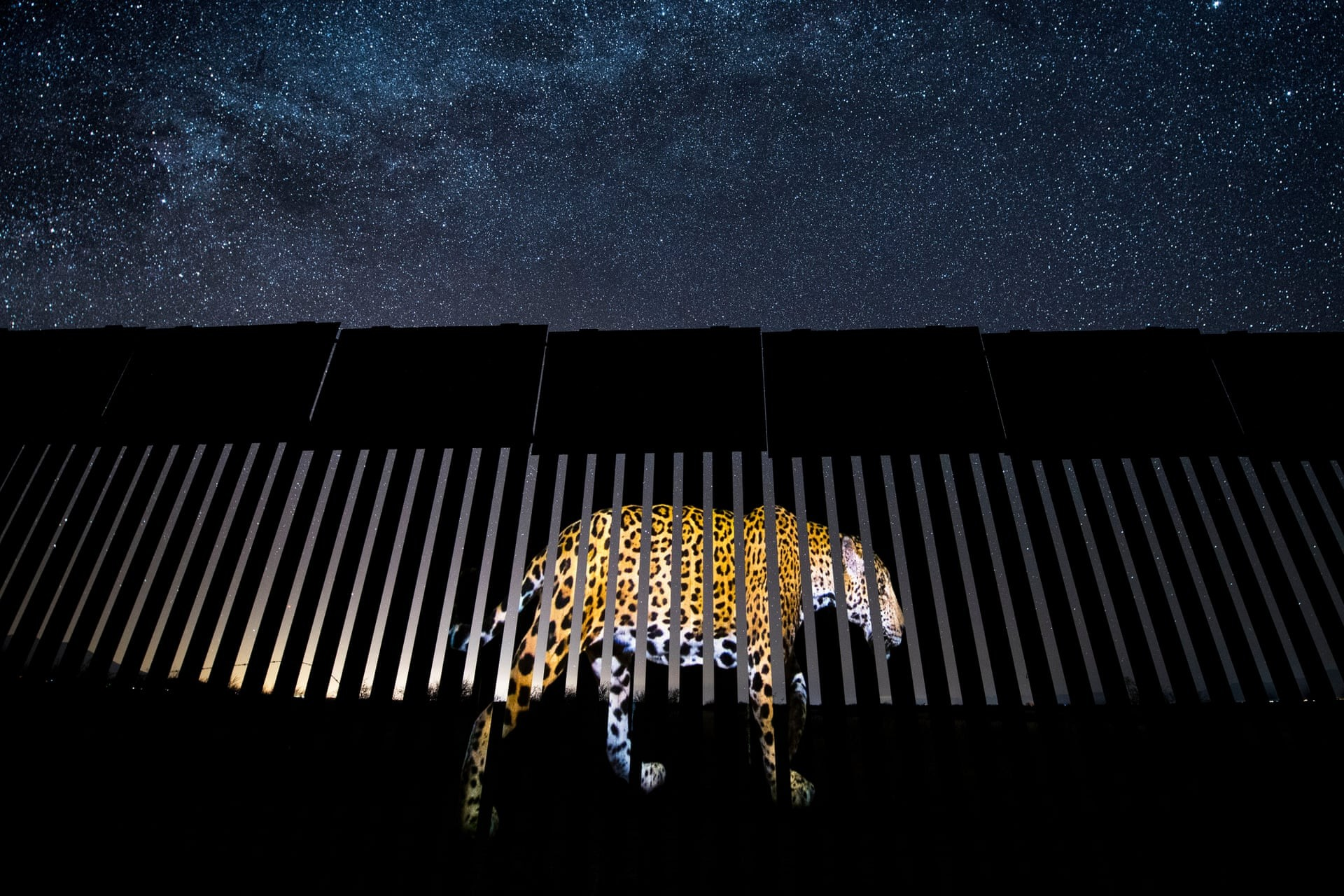 Another Barred Migrant (Foto: Alejandro Prieto/2019 Wildlife Photographer of the Year)