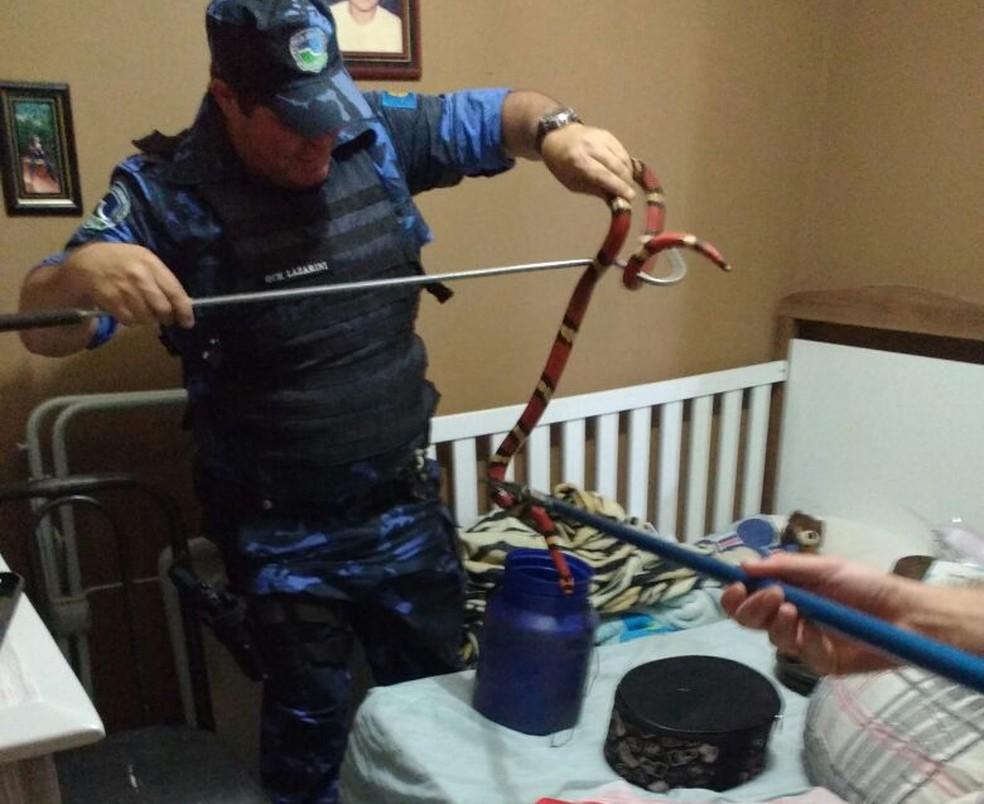 Coral falsa também era mantida em cativeiro na casa em Botucatu  (Foto: Guarda Municipal / Divulgação )