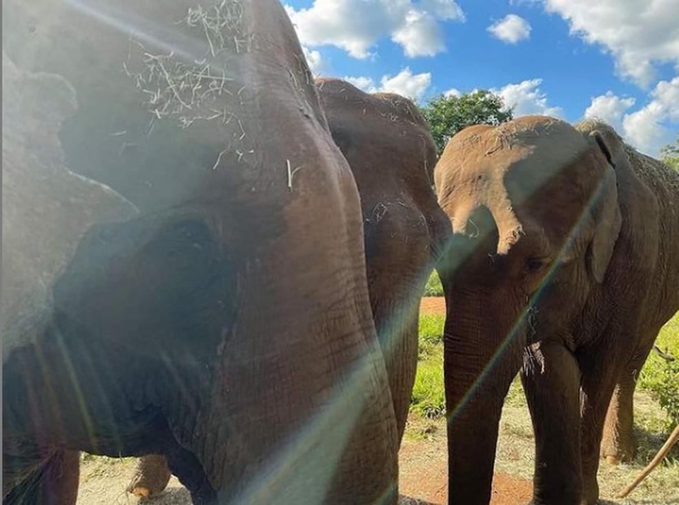 Rana, Bambi e Mara vivem no Santuário em MT — Foto: SEB/Divulgação