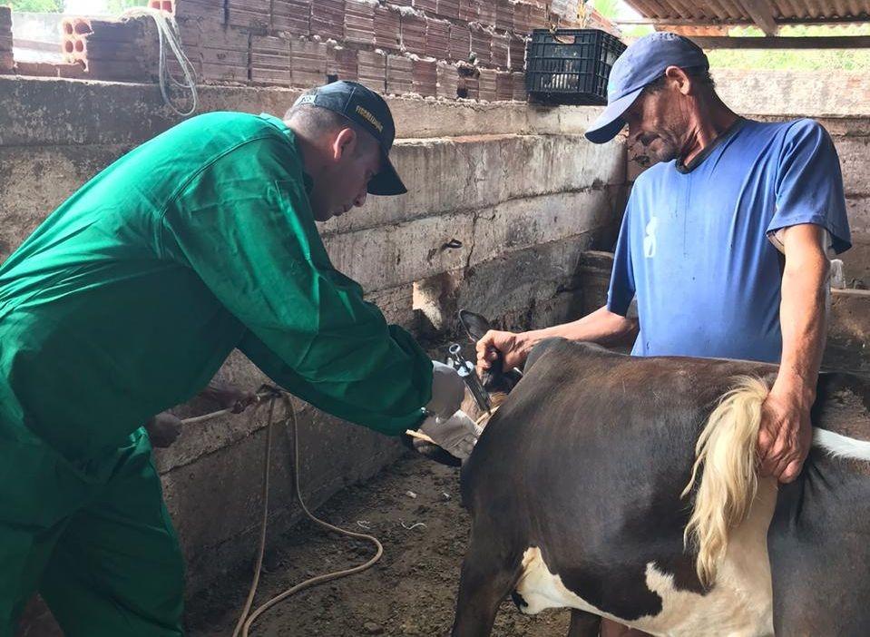 Vacinação contra febre aftosa é prorrogada até 30 de junho na Bahia