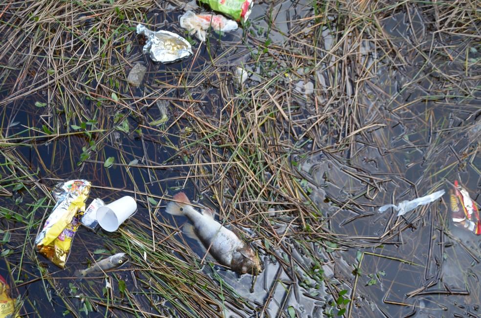 Peixes mortos e acúmulo de lixo assustaram os banhistas na APA do Rio Curiaú (Foto: Jorge Abreu/G1)