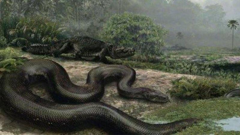Ilustração de espécie de cobra pré-histórica Titanoboa, que foi considerada no estudo (Foto: Divulgação/Universidade da Flórida)