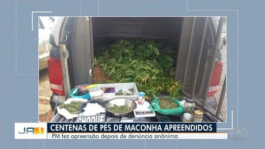Polícia encontra plantação com mais de 300 pés de maconha em chácara de Luziânia
