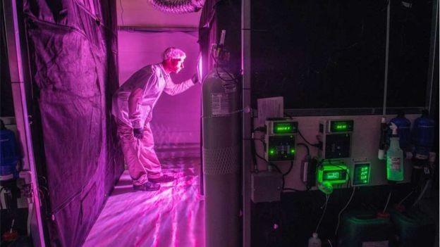 Laboratório no Canadá da Bedrocan, empresa especializada em produção de maconha para uso terapêutico e que fechou parceria com a Entourage para produção no Brasil (Foto: Divulgação)