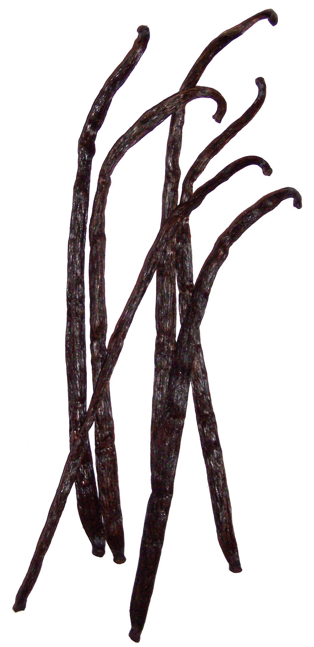 Vagens secas de baunilha (Foto: Wikimedia/B.navez)