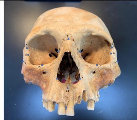 Estudo com crânios sugere que Colombo estava certo: havia canibais no Caribe (Foto: Ann Ross/Nature)