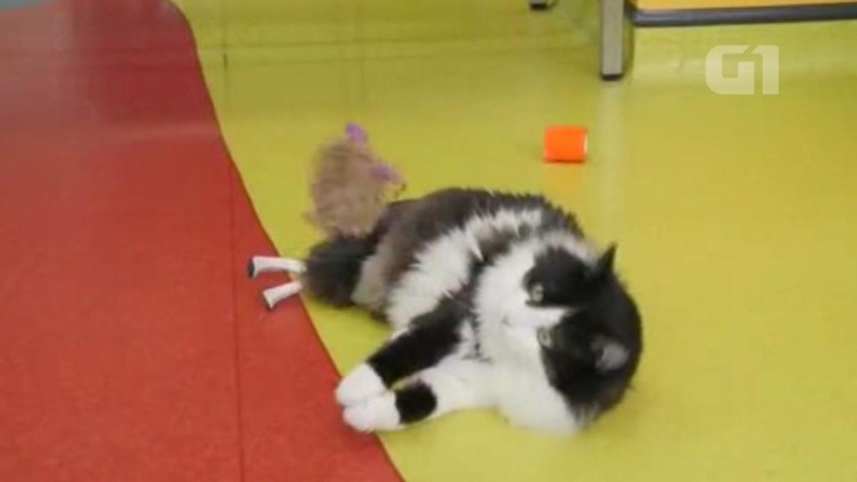 Gato com 'patas biônicas' aguarda adoção na Bulgária
