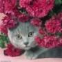 Papel de Parede: Kitten Flower
