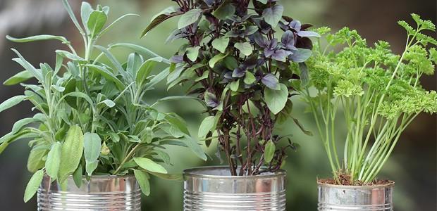 Já pensou em ter uma horta em casa? (Foto: Karen Hofstetter / Divulgação)