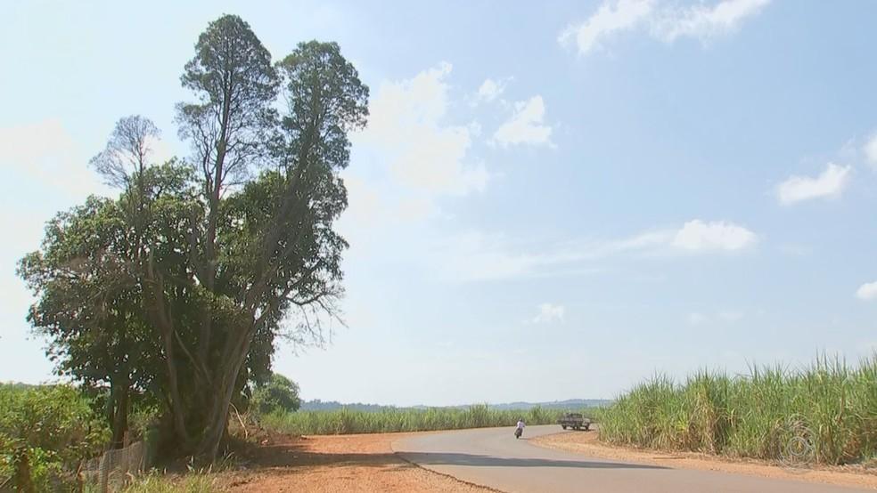 Acidente foi na estrada vicinal Octavio Pilon entre Cerquilho e Cesário Lange (SP) — Foto: Reprodução/TV TEM
