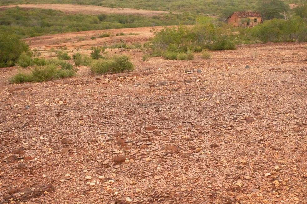 Área desertificada em Canudos (BA) por causa das queimadas e da criação de animais. — Foto: Celso Tavares/G1