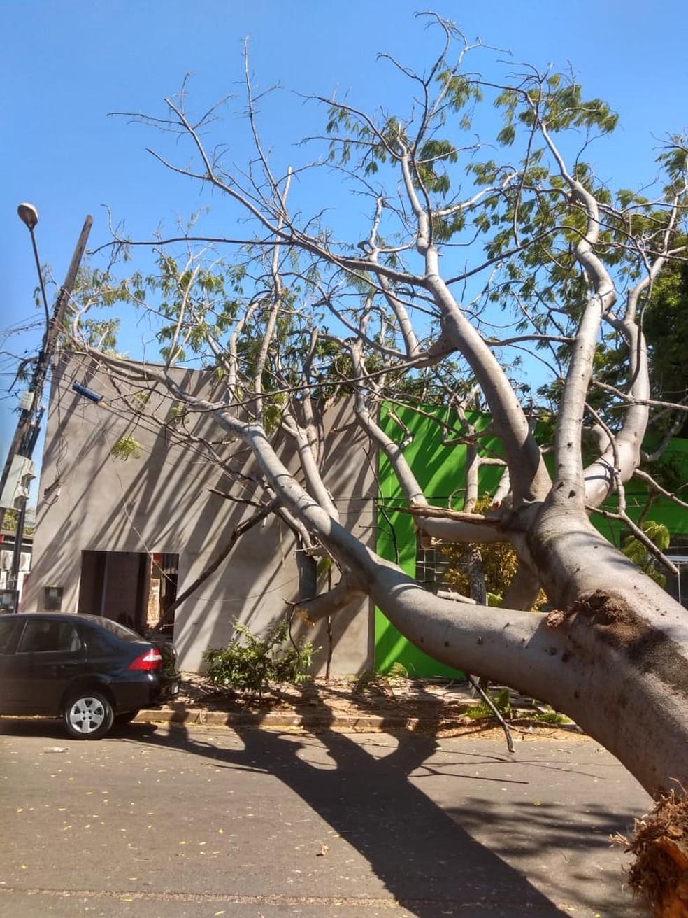 Árvore cai e atinge prédio comercial em Sinop — Foto: Secretaria Municipal de Meio Ambiente