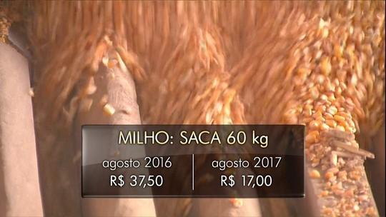 Com preço baixo, produtores do PR seguram milho no armazém