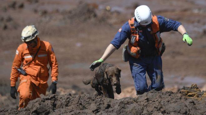 Cães têm desempenhado papel essencial nas buscas em Brumadinho (Foto: AFP via BBC)