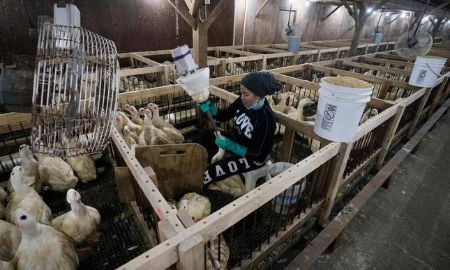 Funcionário alimenta um pato em fábrica de Nova York