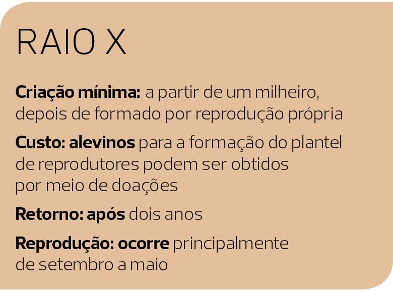 Como Criar (Foto: Divulgação)