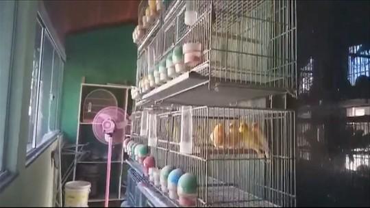 Homem é preso pela PF com mais de 100 aves silvestres em Jacareí