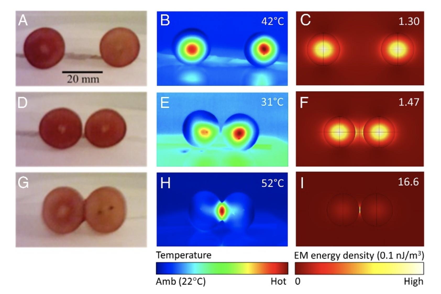Análise de temperatura das uvas no micro-ondas (Foto: Khattak et al., PNAS, 2019)