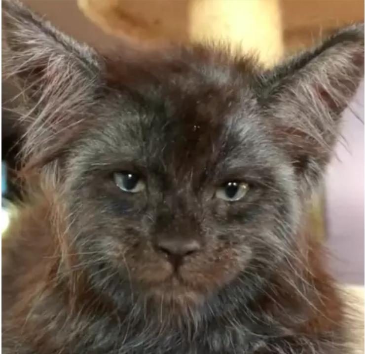 A gatinha Valkyrie tem dois meses de idade  (Foto: Reprodução/Instagram)