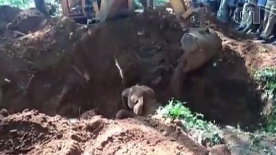 Elefante é resgatado da lama após 5 horas de operação da Índia; veja vídeo
