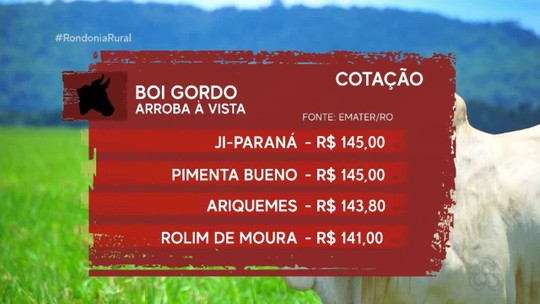 Cotação: Arroba do boi gordo custa de R$ 130 a R$ 145 em Rondônia