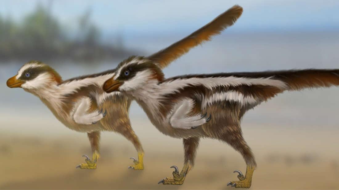 Representação artística do Dromaeosauriformipes rarus (Foto: Universidade de Queensland)