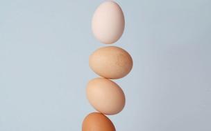 Maneiras e técnicas diferentes de preparar ovo