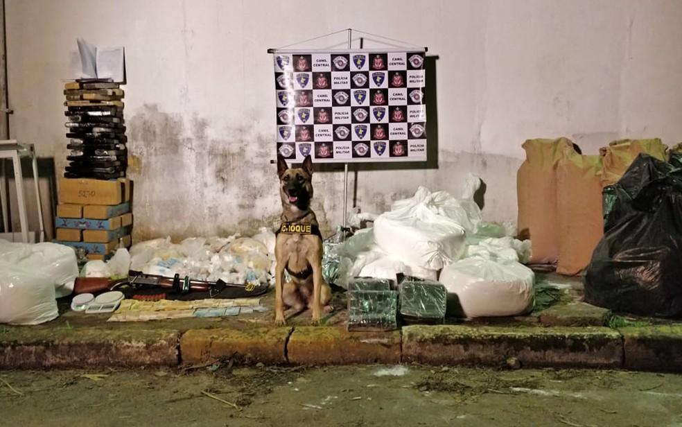 Cadela posa ao lado de drogas apreendidas em barraco na Zona Sul de SP — Foto: Divulgação/Polícia Militar