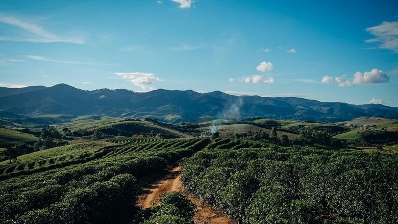 A Fazenda IP tem 700 hectares, conserva nascentes e florestas e destina 146 hectare para o cafezal (Foto: Selva Bizarria)