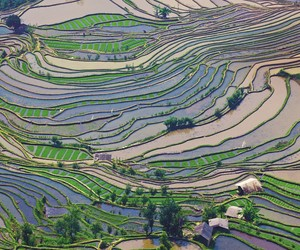 Cingapura incentiva plantio de arroz no mar em busca de autonomia alimentar
