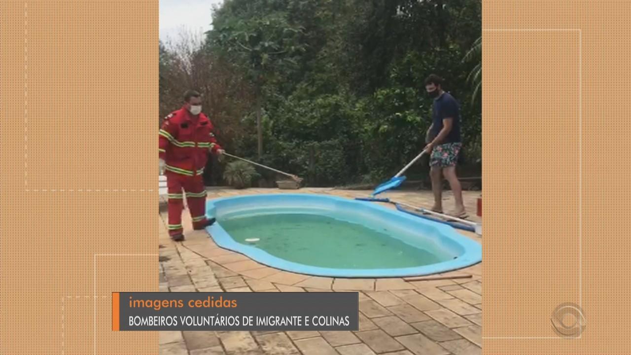 Cobra é encontrada dentro de piscina em Colinas