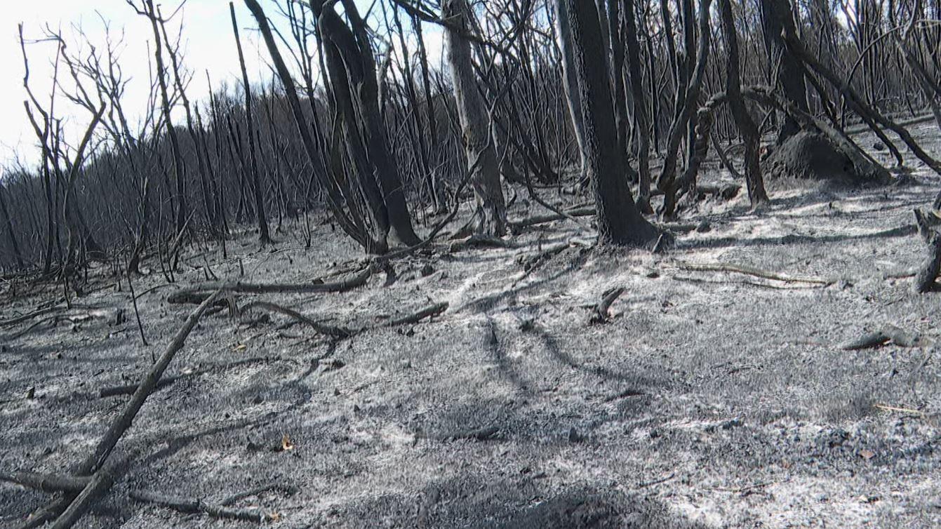 PM aplica multa de R$ 120 milhões a suspeito de incêndio de 10 dias na reserva Jataí em Luís Antônio, SP
