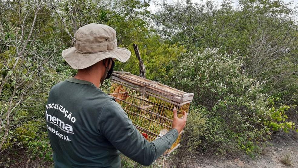 Operação de combate a crimes ambientais resgatou 130 animais silvestres na região de Paulo Afonso, no norte da Bahia — Foto: Divulgação/PRF