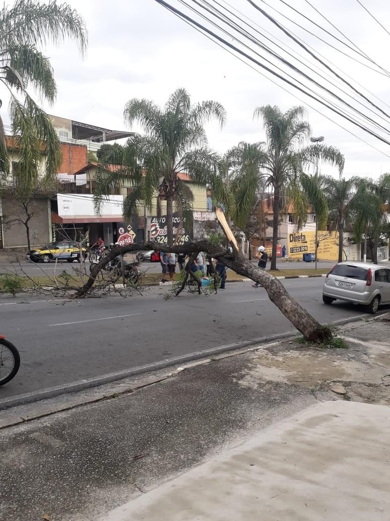 Motociclista fica ferido ao ser atingido por árvore em avenida de Votorantim