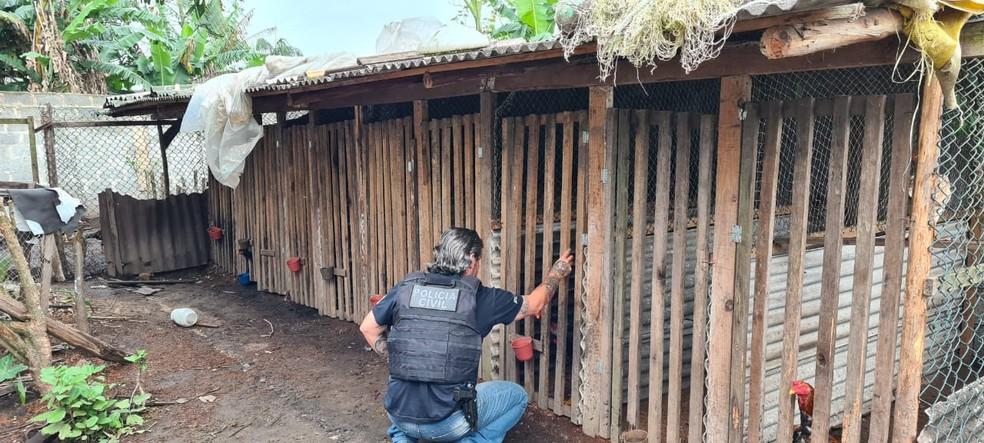 Polícia fez operação em três estados contra suspeitos de organizar rinhas de galo — Foto: Divulgação/PCPR