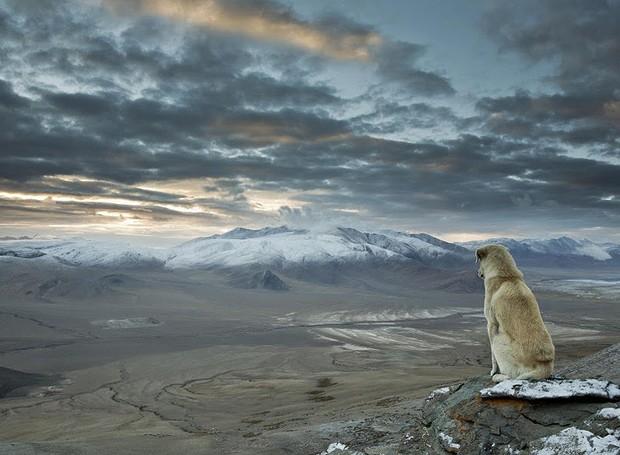 Cordilheira do Himalaia - A maior cadeia montanhosa do mundo está localizada entre a planície indo-gangética, ao sul, e o planalto tibetano, ao norte, atingindo a Índia, China, Butão, Nepal e Paquistão. Até o cãozinho ficou impressionado com a vista  (Foto: Reprodução/BlogBlux)