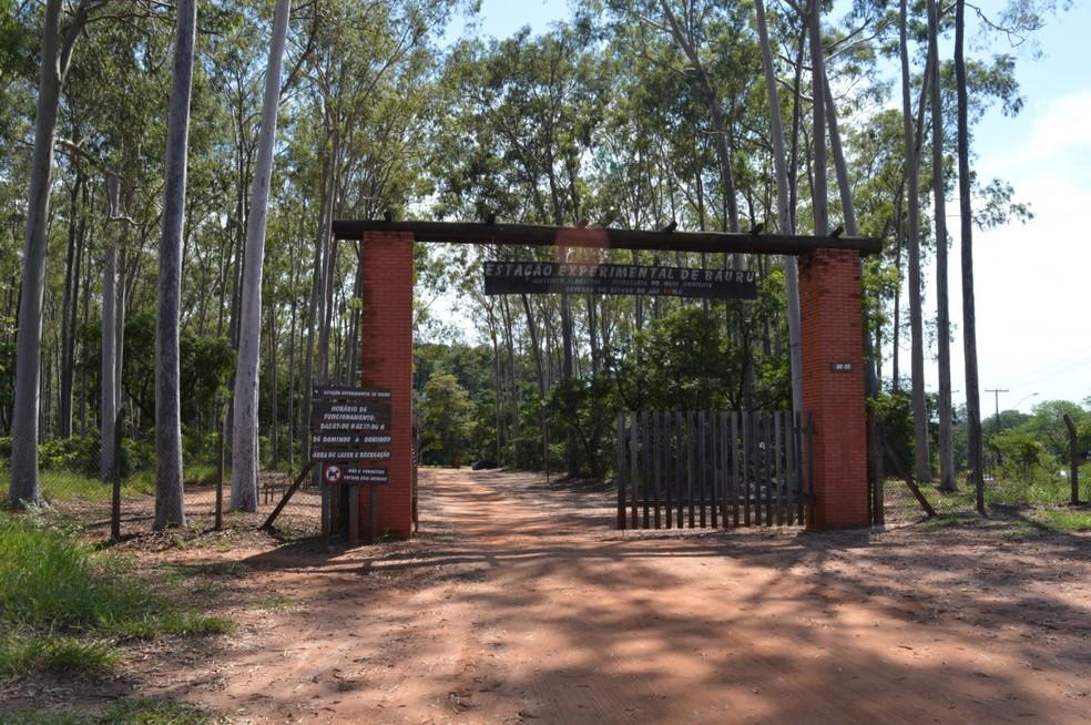 Horto Florestal volta a receber visitantes a partir desta segunda-feira em Bauru — Foto: Prefeitura de Bauru/ Divulgação