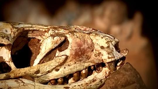 Fóssil de crocodilo com cerca de 80 milhões de anos é apresentado em MG