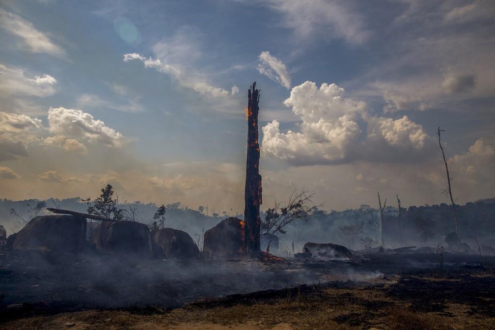 A fumaça e as chamas das queimadas na Amazônia em Altamira (PA) — Foto: João Laet / AFP Photo