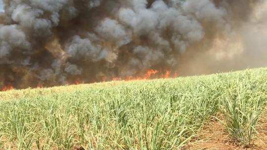 Queimadas devastam zona rural e mudam rotina de moradores do campo