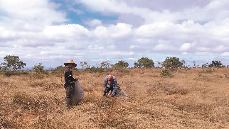 Coletores de sementes em Reserva de Desenvolvimento Sustentável (RDS) no Alto Rio Pardo (MG) (Foto: Divulgação)