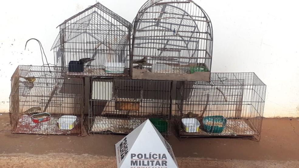 Policia de Ituiutaba realizou a apreensão de sete canários da terra e um papa-capim bigodinho — Foto: Polícia Militar/Divulgação
