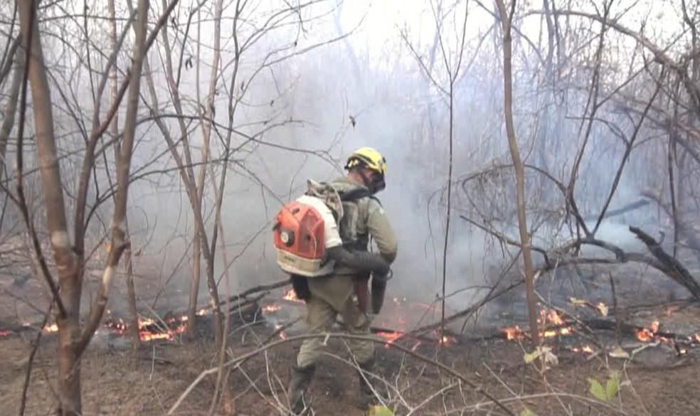 Brigadistas percorrem até 10 km e carregam bolsa com água de 22 quilos para combater incêndio no Piauí — Foto: Reprodução/TV Clube