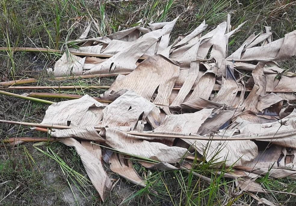 Vegetação foi encontrada e, para os mateiros, indica vestígios de presença de alguém na região que não é habitada — Foto: Arquivo Pessoal
