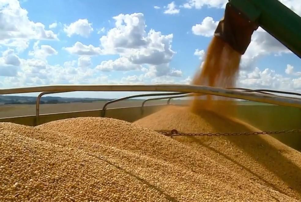 Cidade com melhor preço de soja é Machadinho — Foto: Reprodução/RBS TV