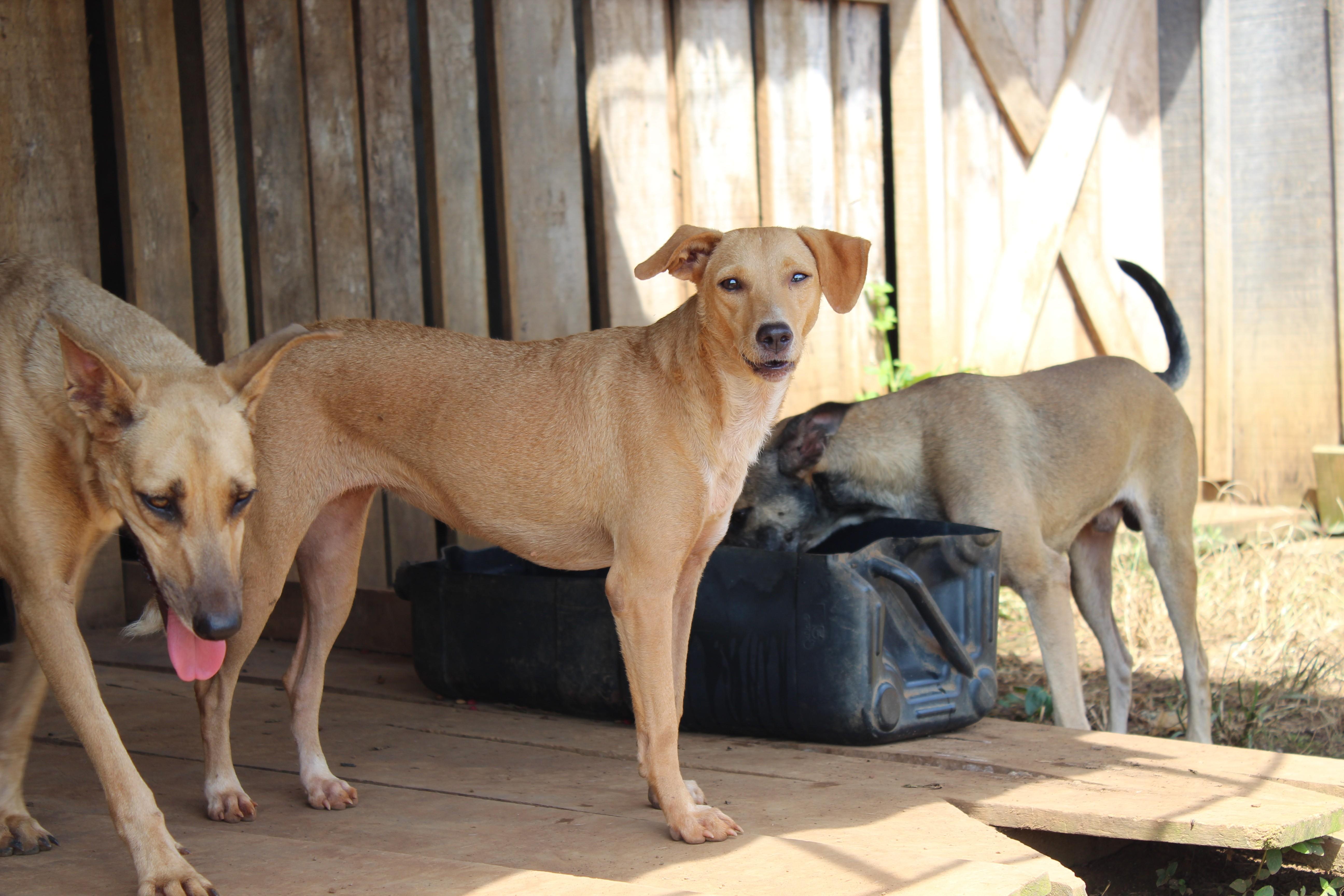 'Abril Laranja': projeto que institui mês da conscientização contra os maus-tratos aos animais em Uberaba é aprovado na Câmara