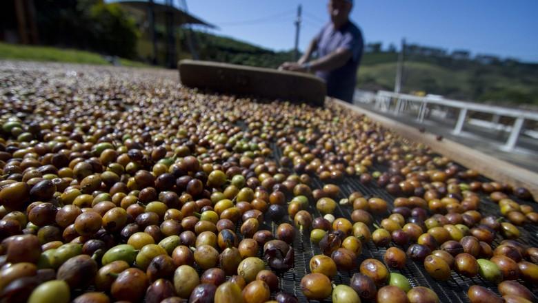 grãos_café (Foto: Rogerio Albuquerque / Editora Globo)