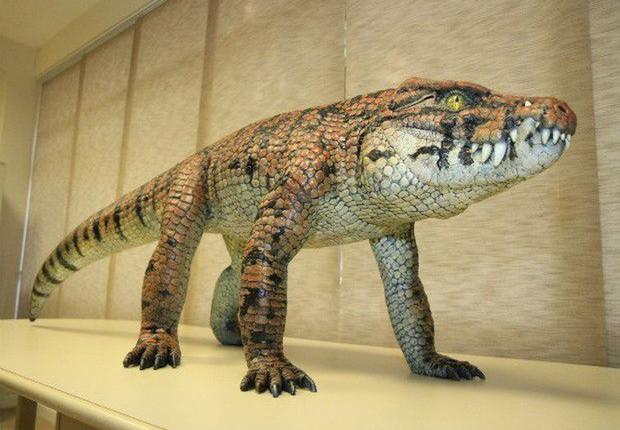 Fóssil do Caipirasuchus mineirus revela que o animal tinha um esqueleto articulado e possuía hábitos terrestres. Tinha um andar erguido do chão, similar ao de um cachorro -  (Foto: Luís Adolfo/UFTM/direitos reservados/Agência Brasil)